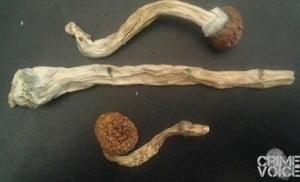 Phil Marcelino's appreciation of psilocybin mushrooms is evident in his Facebook cover photo.