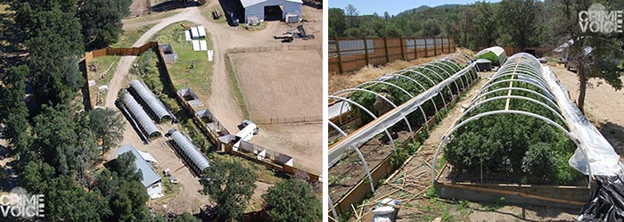 Detectives found 3 hoop greenhouses at their first stop in Kelseyville.