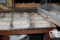 Agents Seize $7.2 in Meth, 2 Arrested in Raid