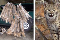 Poacher Busted For Illegal Trapping And Animal Cruelty