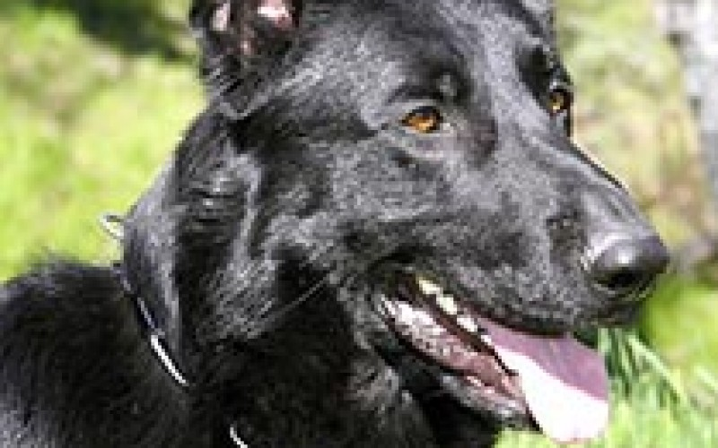 Police dog helps nab frequent offender