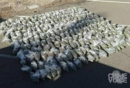 Castellanos and Pelayo were hauling 230 pounds of processed marijuana in their van.