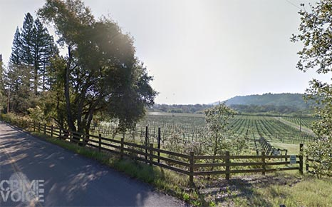 Westside Road runs through vineyards in rural Sonoma. This springtime image from Google Maps shows bare vines, but they are much fuller and easier to hide in during fall.