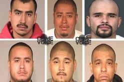 Gang Members Arrested in Murder Case During Sweep