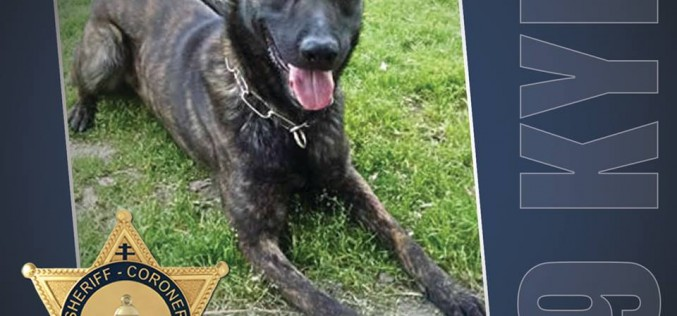 "San Jacinto Police Department Welcomes New K-9 Officer after Tragic Death of ""Sultan"""