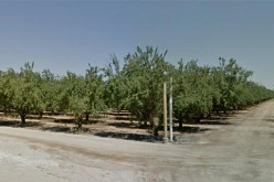 Arrest marks trend in Madera field labor workers