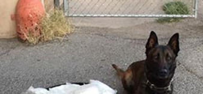Tico Finds Meth on Pico Avenue