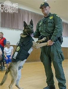 Sheriff's K9 Dickie was utilized to help corral Logue