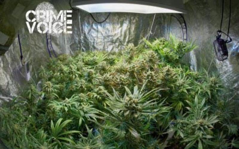 Indoor Marijuana Farmers Busted