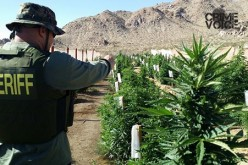 Drought Conditions Didn't Deter Huge Marijuana Cultivation