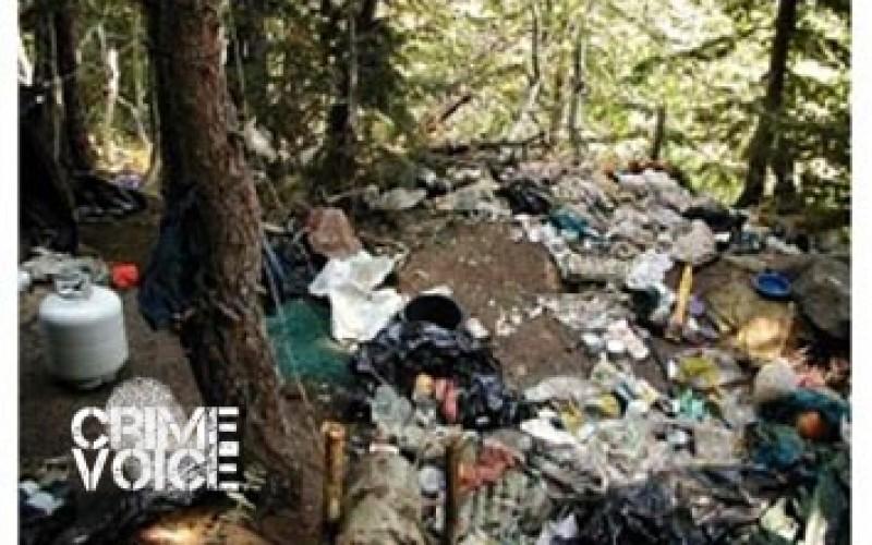 Mountain Marijuana Cultivation Site Shut Down Amid Damage