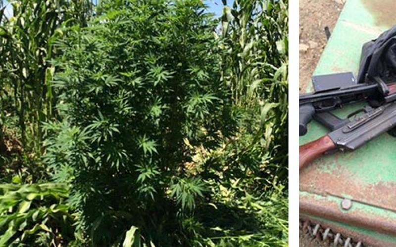 Federal Agents Raid Illegal Marijuana Grow
