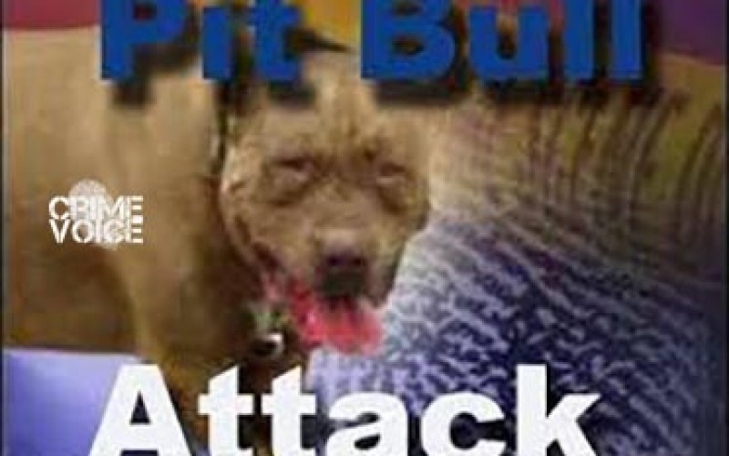 One Killed and One Injured in North Shore Dog Attack