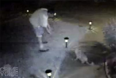 Video surveillance caught the suspect approaching and then taking the cat.