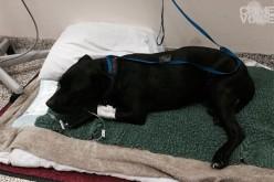 "CHP Officers Rescue Dog, ""Mr. Man,"" on Santa Rosa Avenue"