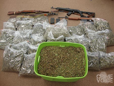 The Sheriff's Department investigators hauled in processed and loose marijuana, along with 4 weapons.
