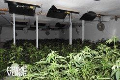 Grow House Raid Nets $5.7 Million Marijuana Haul