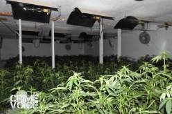 Grow House Raid Nets $5.7 Million Marijuana Haul