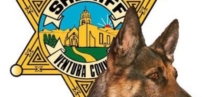 K9 Cop Nabs Robbery Suspect