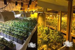 Three Arrested in Large Marijuana Bust