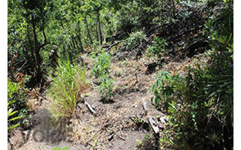 Nearly 6,000 Pot Plants Discovered
