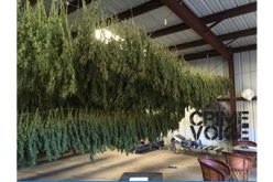 Overflight Operation Spots Marijuana Grow