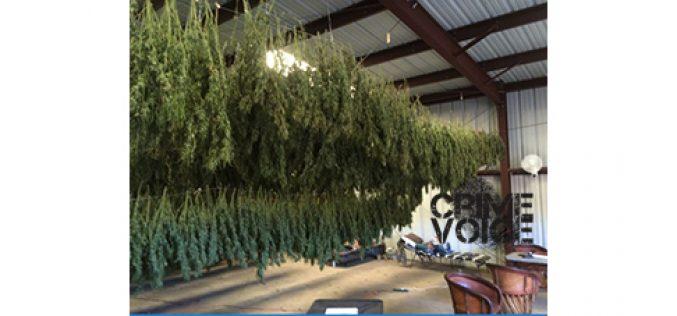 Overflight Operation Spots Marijuana Grow