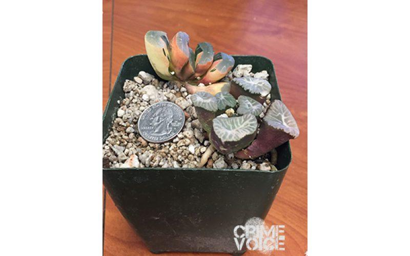 Rare Plant Thief Nabbed