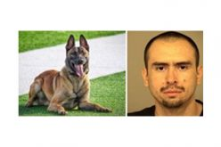 "Warrant Arrest by K-9 ""Leo"""