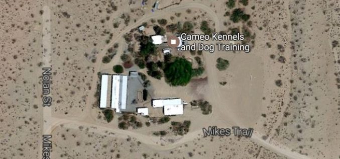 Deadly Shooting at Ridgecrest Kennel