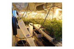 Shi X Yu Arrested for Marijuana Grow, Utilities Theft
