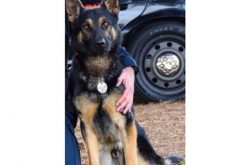 Suspect stabs girlfriend multiple times in her abdomen, kills Sunnyvale DPS K9