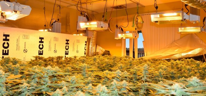 Illegal marijuana grow catches police attention; Sheriff's Office investigating