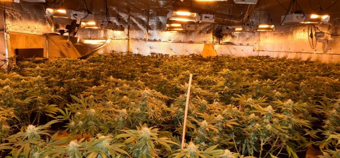 Calaveras County Sheriff's Department discovers illegal marijuana grow; 2 arrested