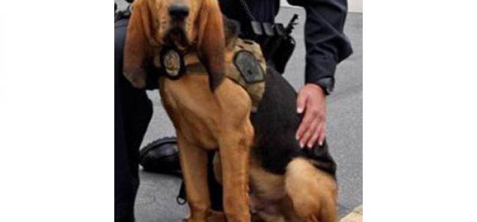 """K9 Unit's """"JAX"""" Rescues an Unconscious Missing Person"""