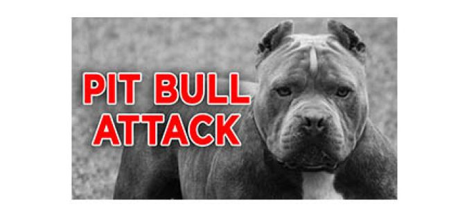 3-Year-Old Mauled by Family's Pit Bull