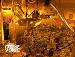 grow-house