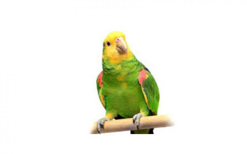 5 Years Probation for Killing Parrot