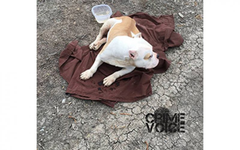 Dumping Dogs in Clarksburg Continues
