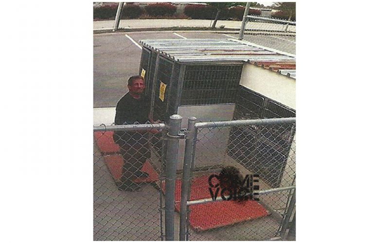 Man Breaks His Lost Dog out From Kennel
