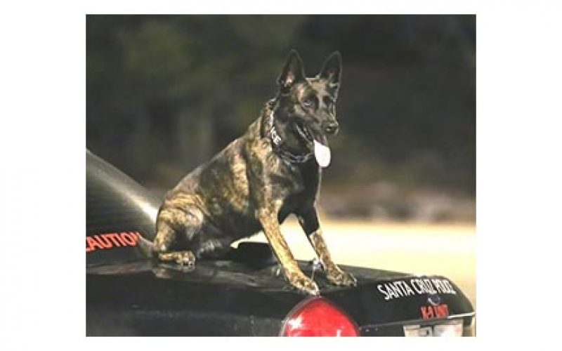 K-9 Luna Does it Again, Sniffs out Drugs and Guns