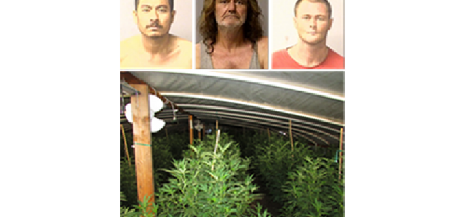 Early Morning Raid Uproots 130 Marijuana Plants