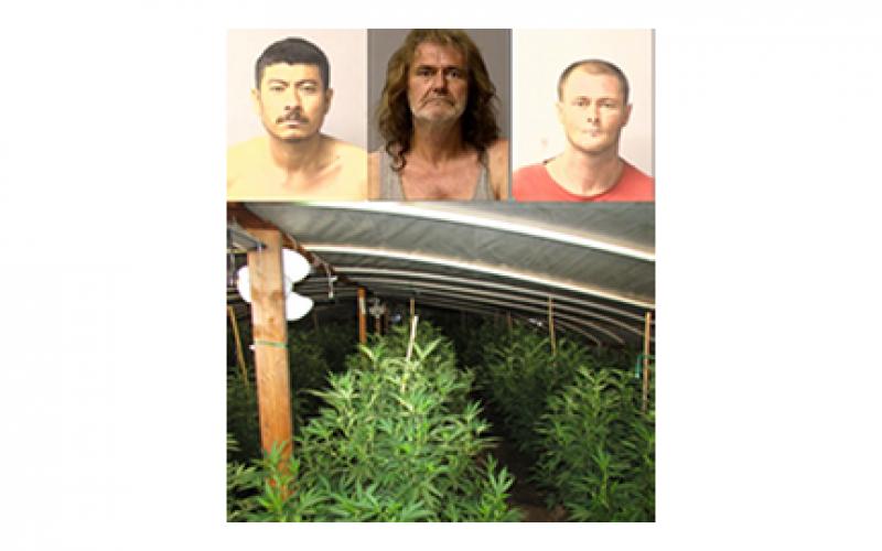 Early Morning Raid Uproots 130 Marijuana Plants