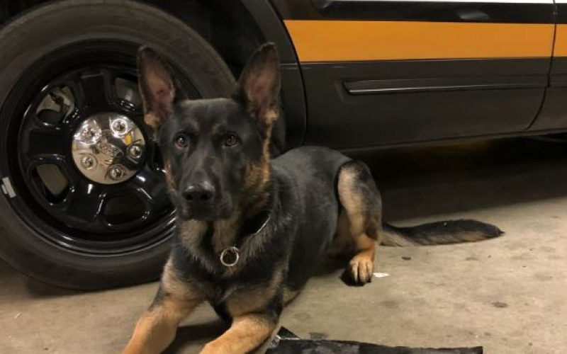 K-9 Fritz Helps Stop Tina and Arrest Tedi in Their Toyota