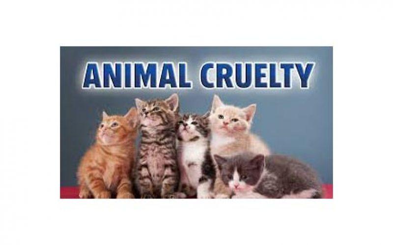 Animal Cruelty Results in Cat's Death, Man's Arrest