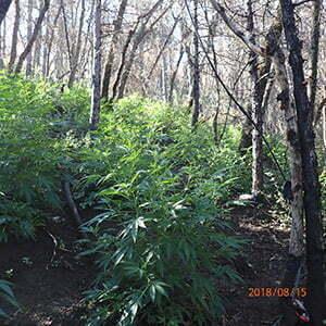 10,000-pot-plants