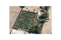 Probation Search Unveils Illegal Marijuana Grow