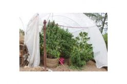 Meth Dealer and Backyard Grower Busted