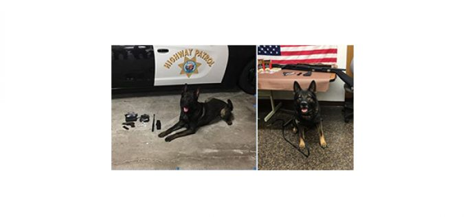 Here are K9 Django and K9 Kai's recent arrests