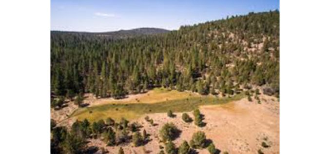 Illegal Grow in Modoc National Forest Eradicated